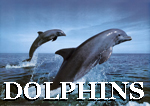 Yacht Charter See Dolphins