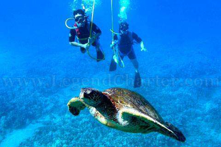 Catalina Island Snuba Turtle Adventure